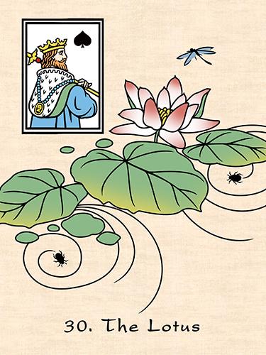 125dpi 30 japan lotus
